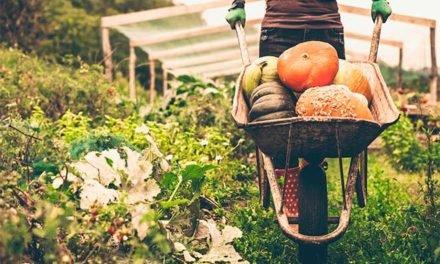 La verdad sobre los alimentos orgánicos